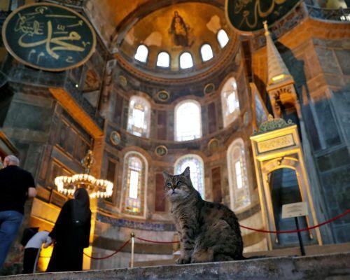 NHÀ THỜ HỒI GIÁO CHO MÈO Ở  ISTANBUL